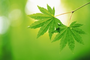 Green-leaves-green-22176144-1920-1280